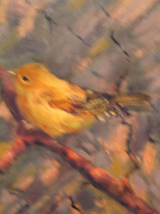 arizona-warbler-2-lg